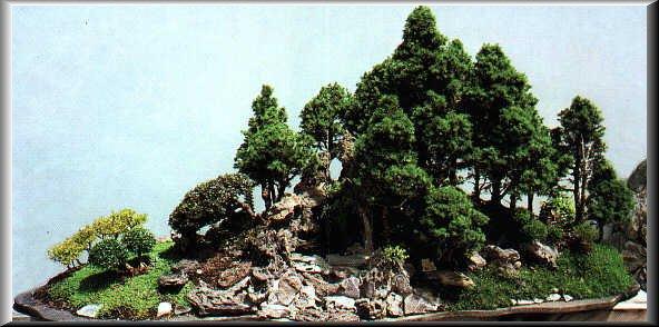Como crear bosques de bonsái MacroBonsai | Olivos Centenarios