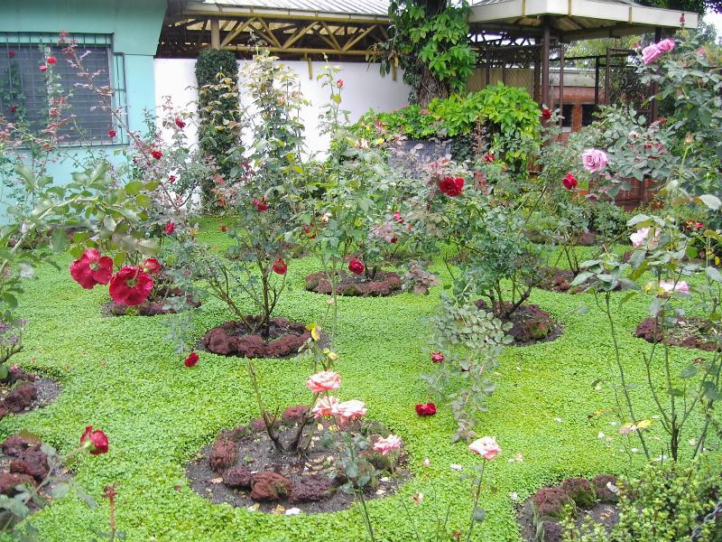Como cultivar rosas en el jard n macrobonsai olivos for Decoracion de jardines pequenos con flores