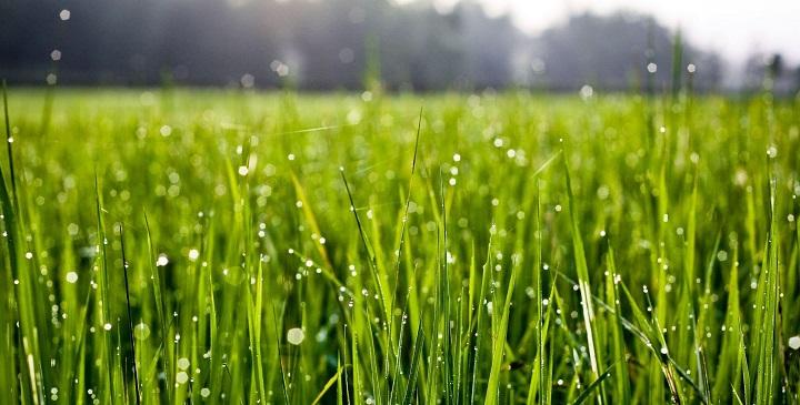 Como proteger el c sped de las lluvias macrobonsai for Como evitar que salga hierba en el jardin