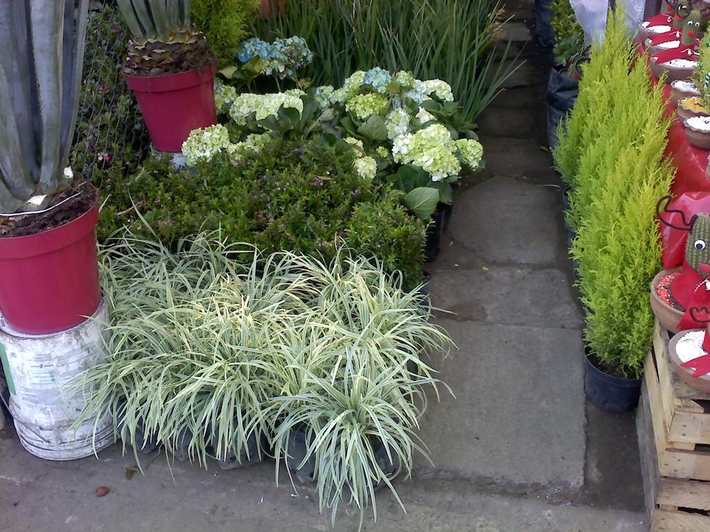 que plantar en jardines con sombra? macrobonsai | olivos