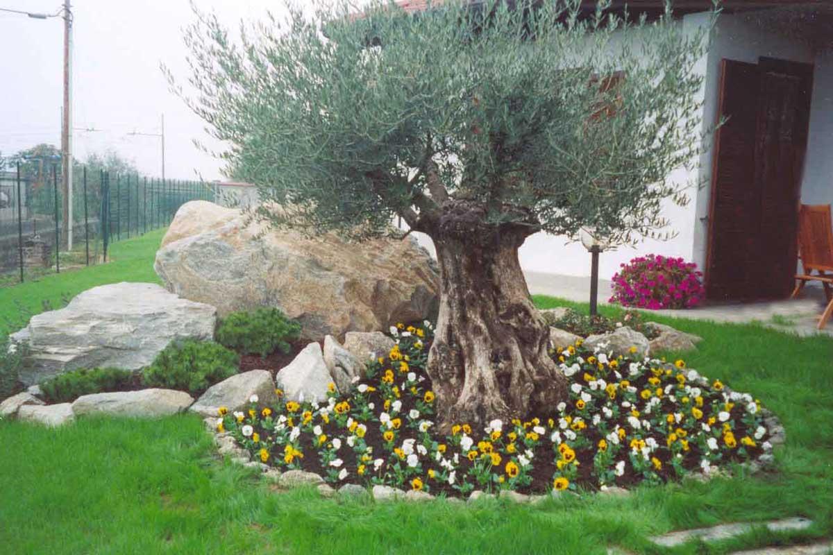 Vivero de olivos centenarios en tarragona macrobonsai for Esempi giardino